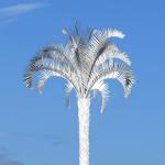White Palm image
